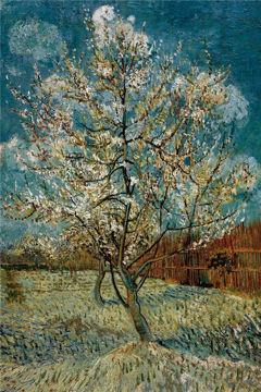 Picture of Peach Tree In Blossom