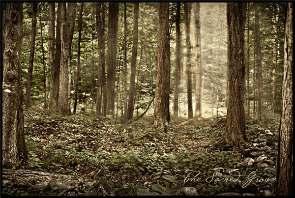 Picture of Sacred Grove