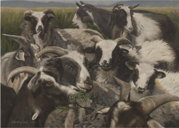 Picture of Sheep And Goats