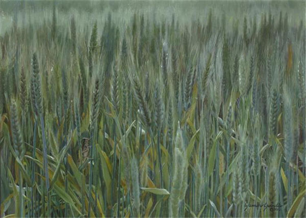 Picture of The Wheat And The Tares