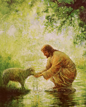 Picture of Gentle Shepherd