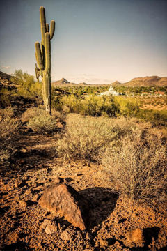 Picture of Phoenix Cactus Hill