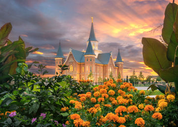 Picture of Provo City Center Temple Orange Flowers