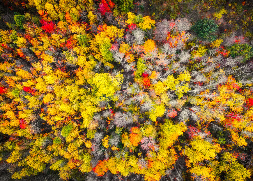 Picture of Sacred Grove Autumn From Heaven