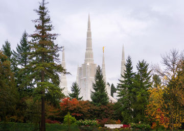 Portland Temple Forest Through The Trees