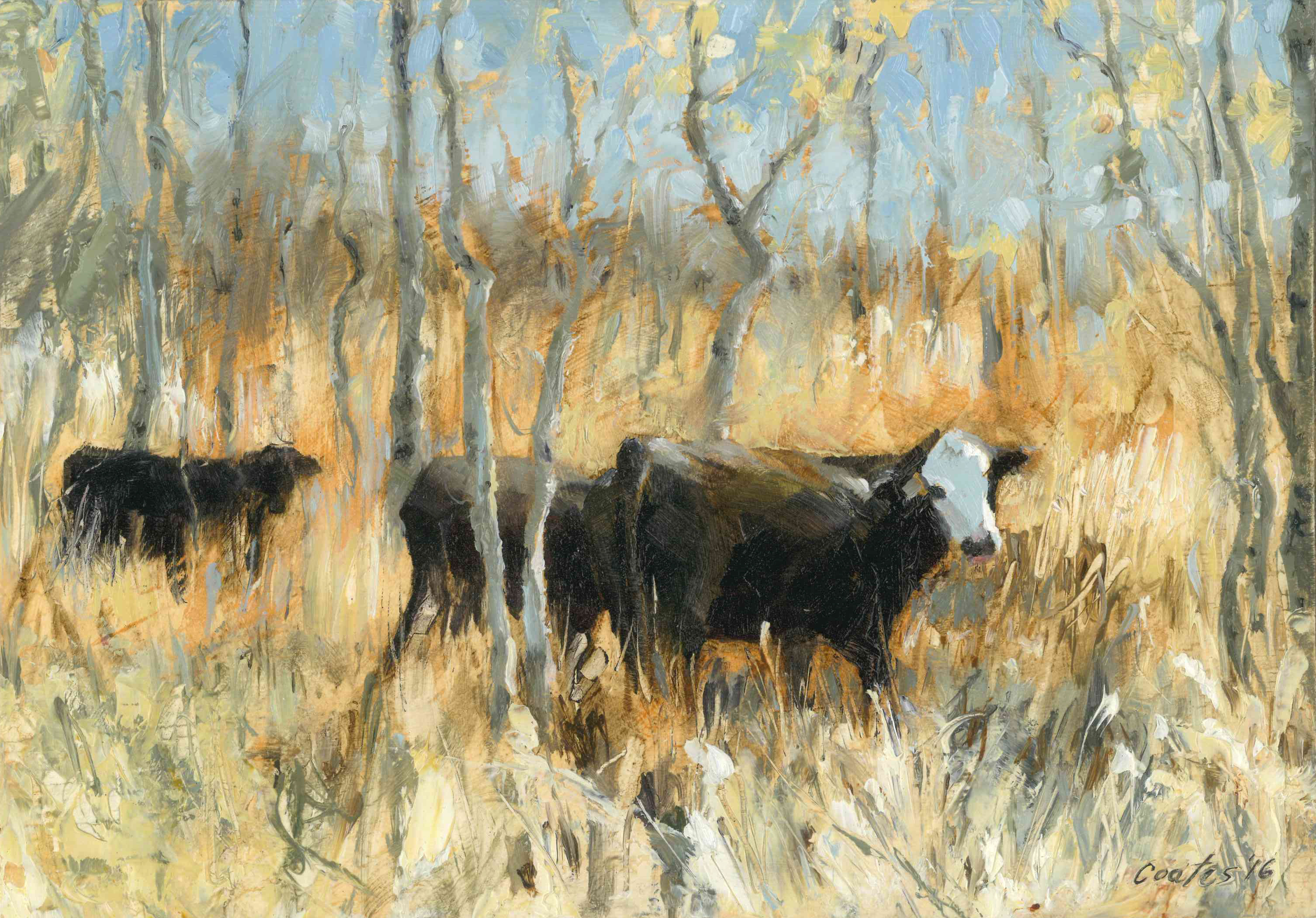 Payson Canyon Cattle